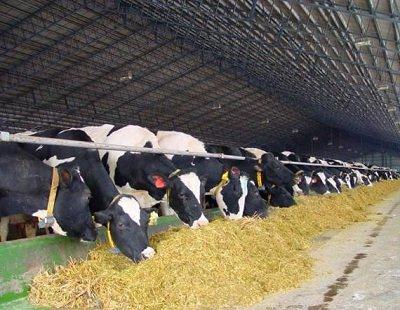 Бизнес-план разведения Крупного Рогатого Скота (КРС)