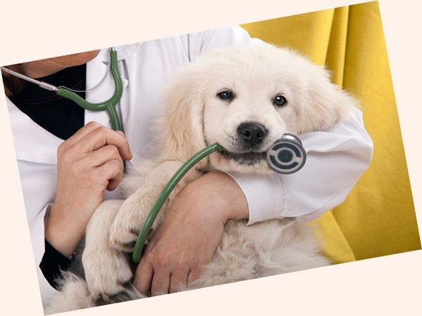 veterinarnaya klinika foto