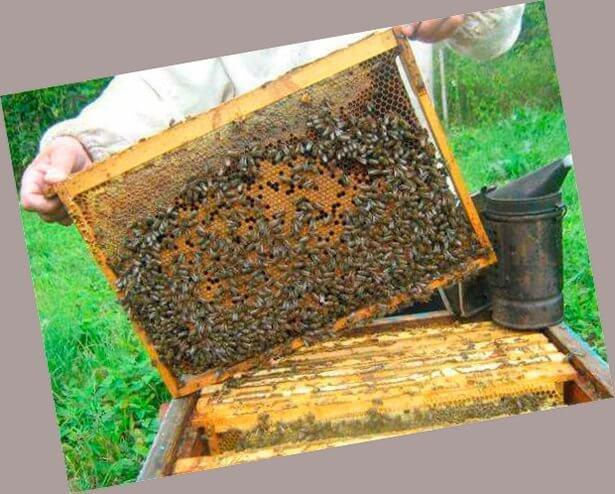 Бизнес план пчеловодства
