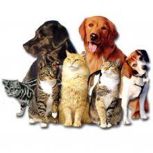 cyrillos pet shop