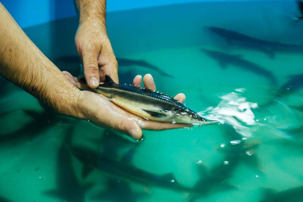 Бизнес-план выращивания рыбы