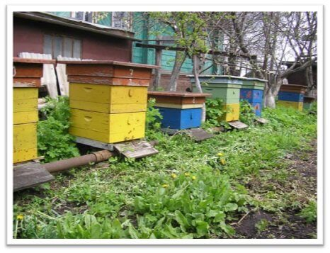 Оборудование для пчеловодства
