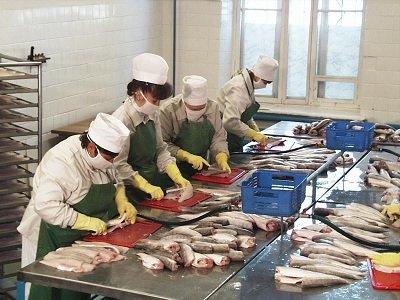 Бизнес план рыбоперерабатывающий цех создатель бизнес плана