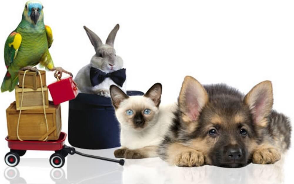 Торговля домашними животными