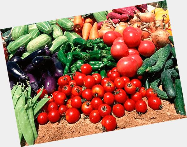 Бизнес план теплица овощи бизнес план на газету