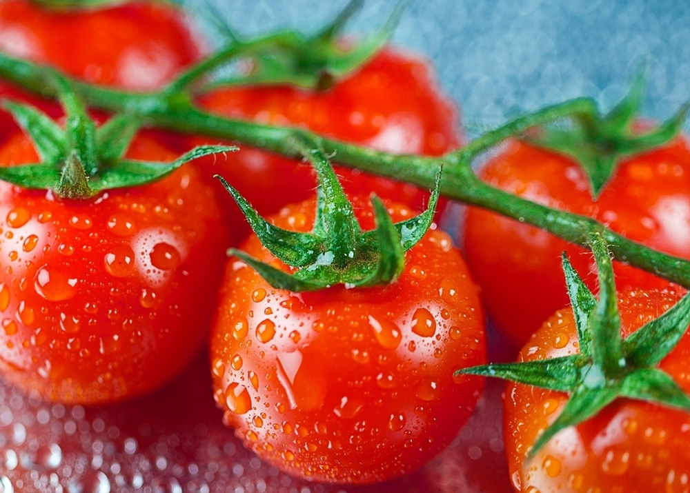 Бизнес план по выращиванию овощей
