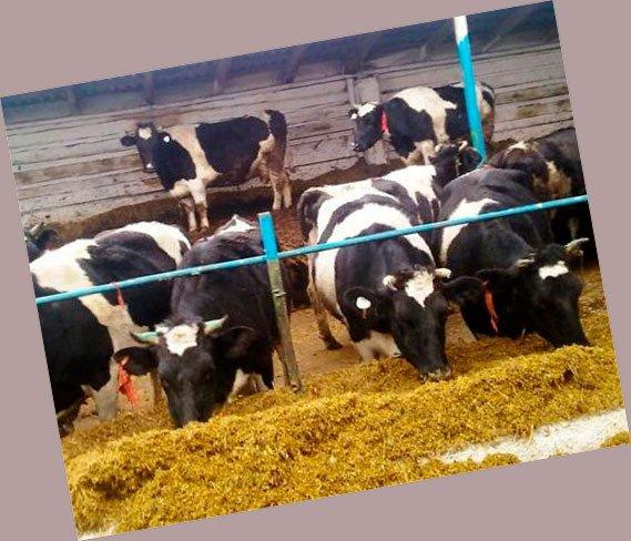 Скачать молочная ферма бизнес план открыть свой бизнес зоосалон