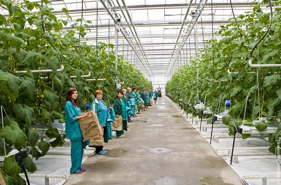 Бизнес план тепличного хозяйства