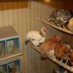 Куриный бизнес - производство и продажа яиц