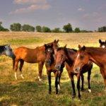 Организация конного бизнеса в современной России