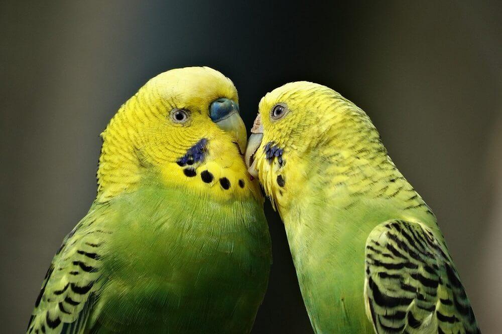 Бизнес-идея разведения попугаев: с чего начать и сколько можно заработать