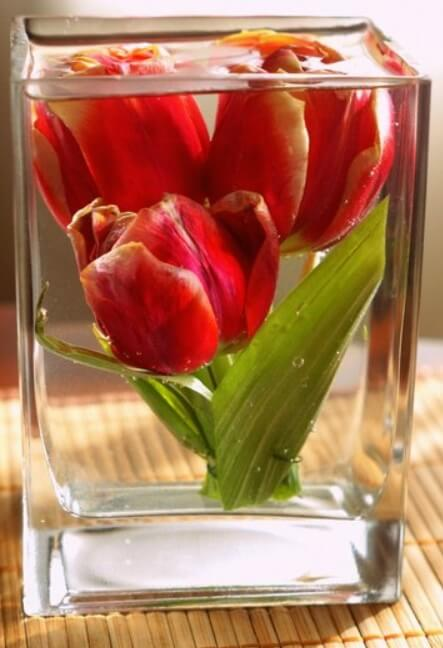 Тюльпаны в глицерине